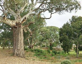 Kenton Avenue Reserve Image 4