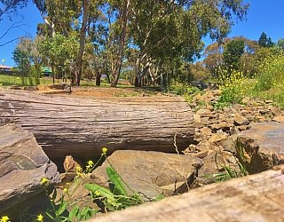 Linear Park Reserve Playspace Rocky River 2