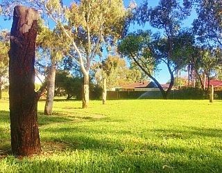Maldon Avenue Reserve Forest Poles