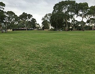 Mitchell Park Oval Grass 2