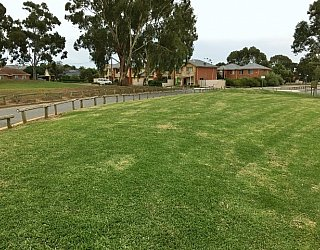Mitchell Park Oval Grass 3