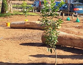 Parsons Grove Reserve Community Planting Day 2
