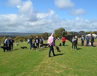 Reserve Street Reserve Dog Park Dogs 2