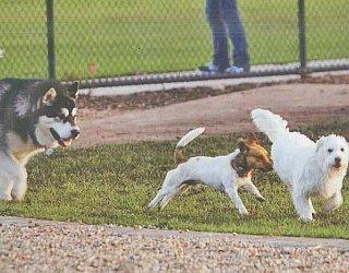 Reserve Street Reserve Dog Park Dogs 6