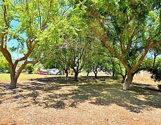 Sandy Glass Court Reserve Trees 1