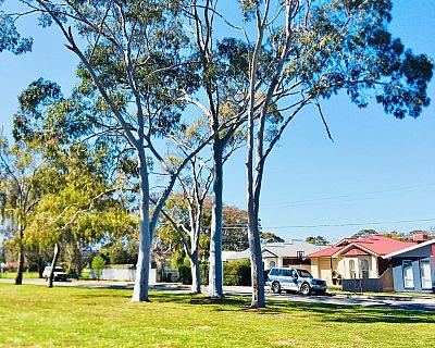 Denham Avenue Reserve Three Trees 1