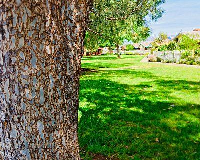 Jacaranda Grove Reserve Tree 4