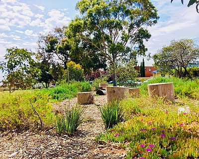 Waratah Square Reserve Native Planting 2