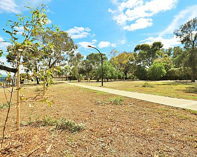 Myer Road Reserve Trees 3