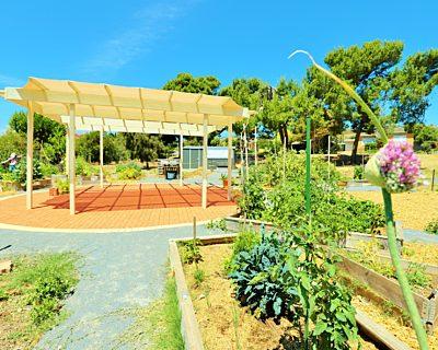 Newland Avenue Reserve Marino Community Garden Pergola 1