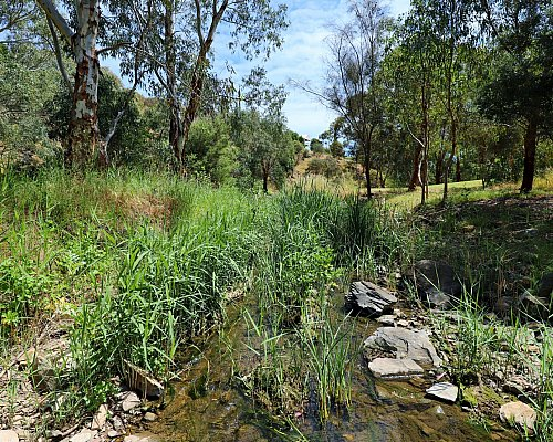 Cormorant Drive Reserve South Field River 1