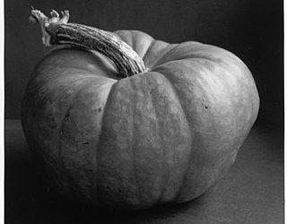 Oliphant Ave Community Garden pumpkinsm