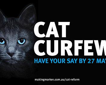 COM372 Cat By law 1920x1080px LS V1 copy4