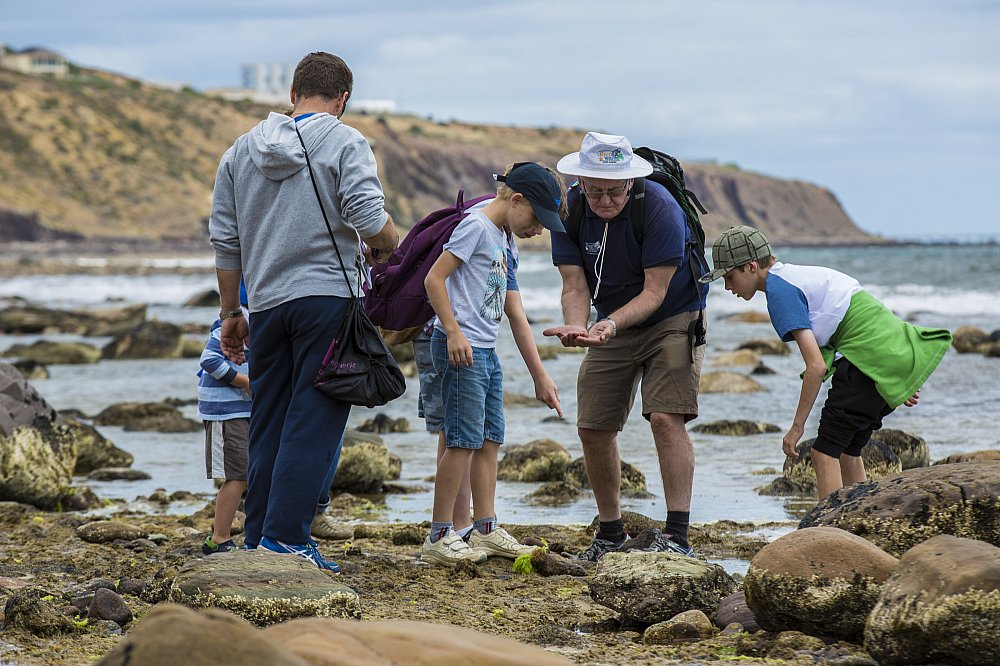 Hallett Cove Bioblitz Looking In Rockpools