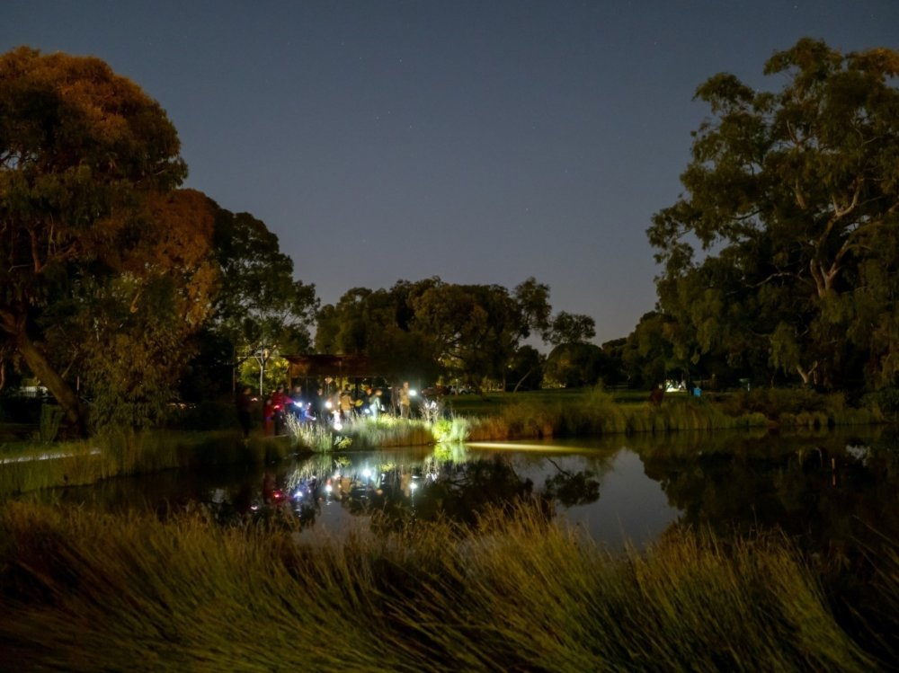 Oaklands wetland Nature by Night