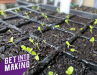 Get Into Making Plant Propogation