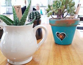 Glandore Cafe 25 Succulents