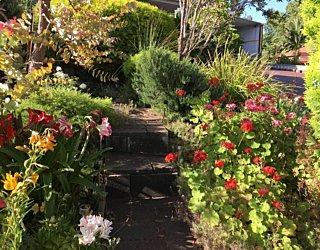 Gardening showcase 2020 23