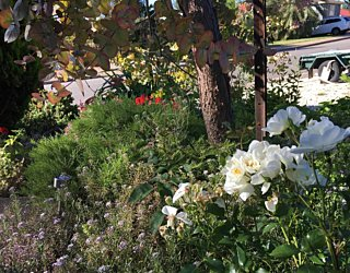 Gardening showcase 2020 24