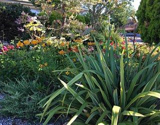 Gardening showcase 2020 25