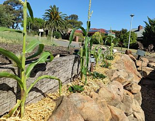 Gardening showcase 2020 35