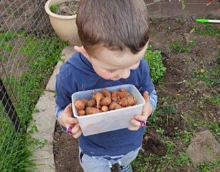 Gardening showcase 2020 7