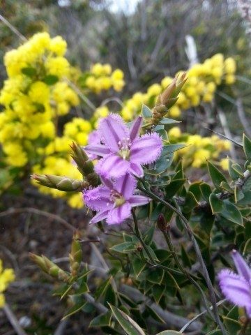 Wildflowers Jpg
