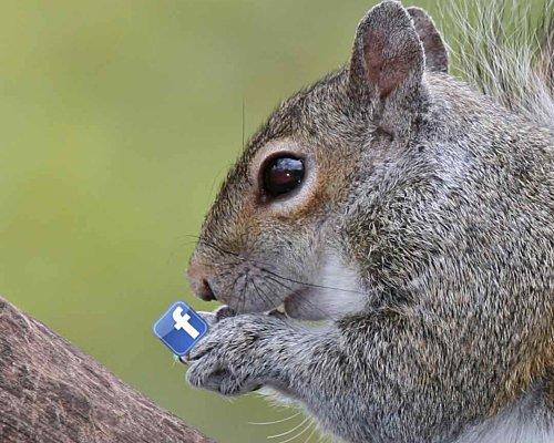 Squirrels And Squatters Facebook Seminar Square