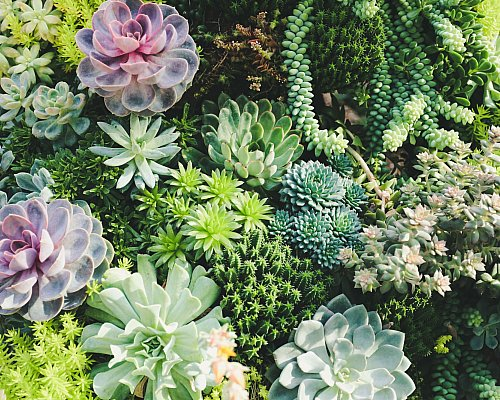 Succulents Wreath Workshop