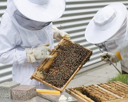 Beekeeper 2650663 640