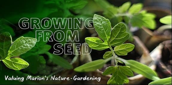 Growing from seed