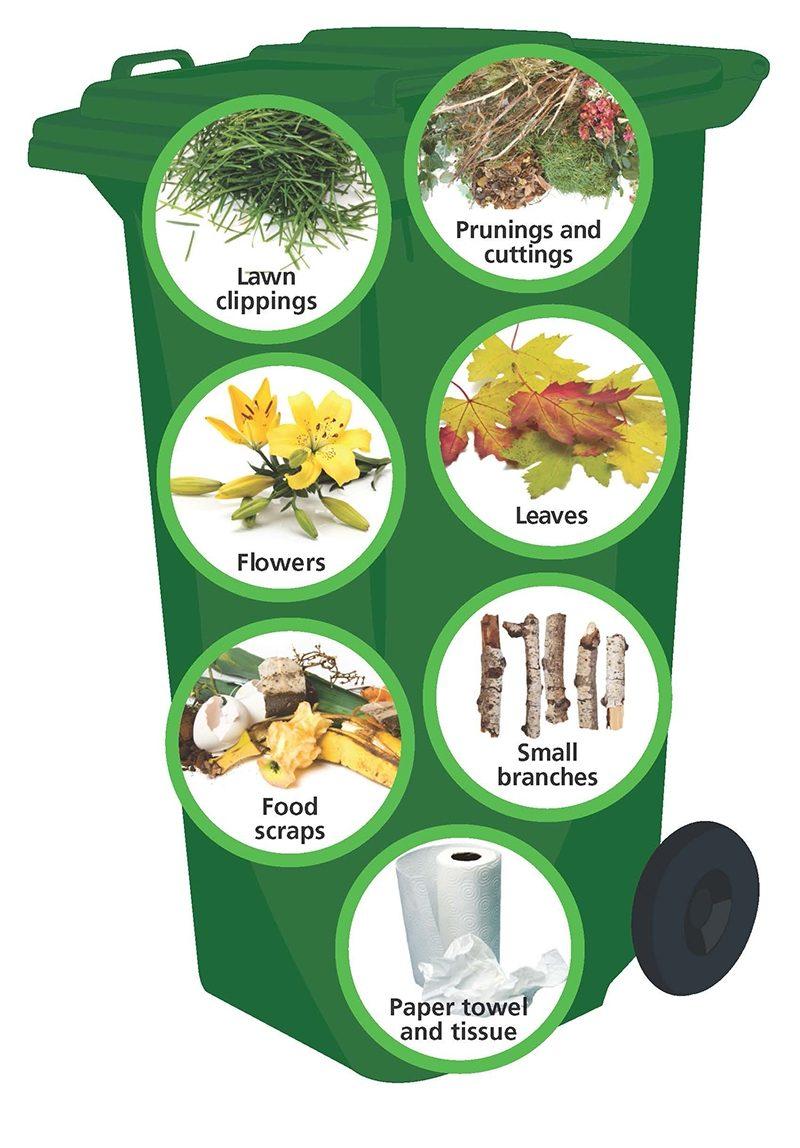 What Goes In Organics Bin